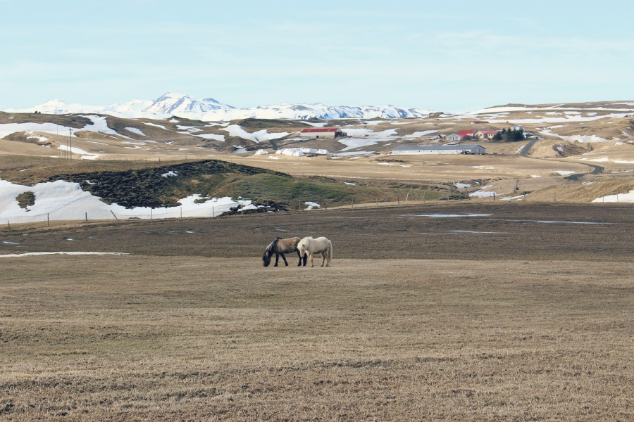 paysage-islande