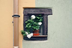 fleurs-eguisheim
