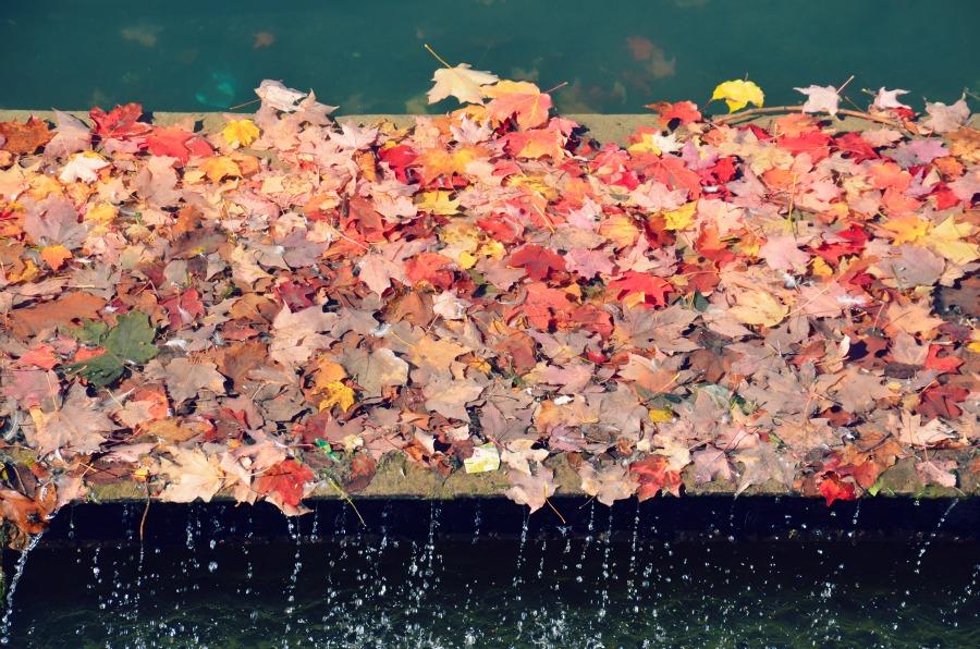 automne-montreal