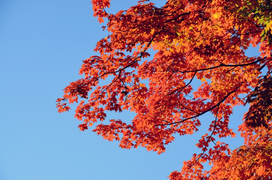 couleurs-automne-new-york